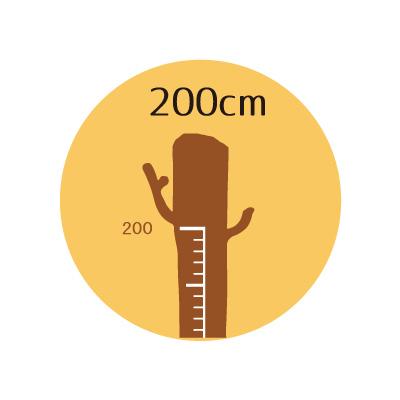 200cm対応木の身長計ウォールステッカー